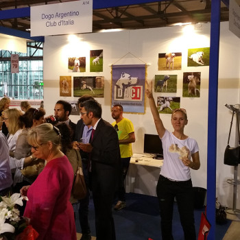 World Dog Show 2015 - Stand Dogo Argentino Club Italia DACI